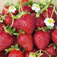 strawberries4